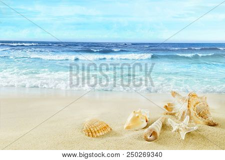 A view of the beach with shells in the sand.
