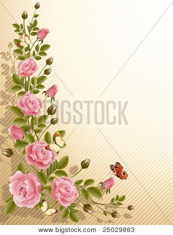 blossoming roses
