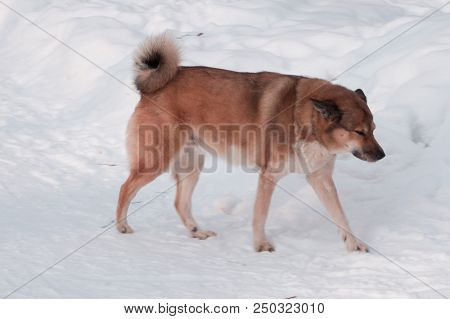 Homeless Dog Resting On The Street And Looking To Leftside Of It, Vagabond Dog That Feel Depressed A