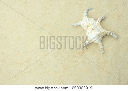 Table Top View Aerial Image Sign Of Decorations Summer Holiday & Nature Background Concept.flat Lay