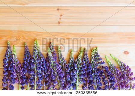 Blue Wildflowers Lupine Border On Wooden Background With Copy Space. Selective Focus.
