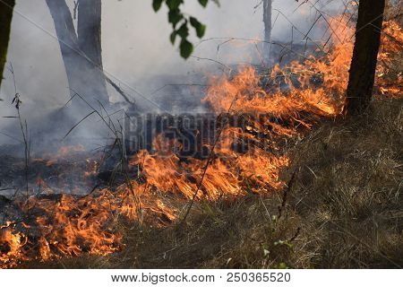 Fire In The Forest. Fire And Smoke In The Forest Litter. The Grass Is Burning In The Forest. Forest