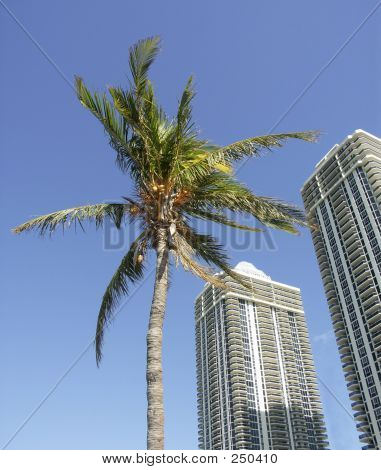 Modern Towers And The Palm
