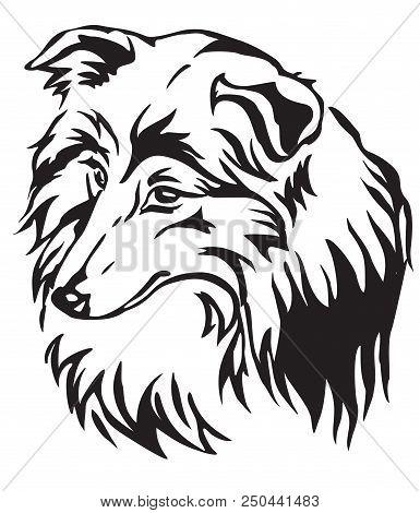 Decorative Portrait Of Dog Shetland Sheepdog (sheltie), Vector Isolated Illustration In Black Color