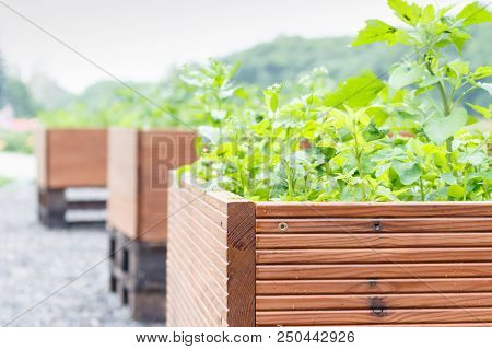 Outdoor Large Brown Woooden Pots With Green Plants, Out Of Focus Background
