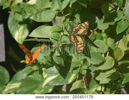 Brilliant Butterfly Garden With A Pair Of Different Butterflies.