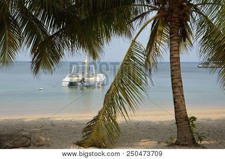 Catamaran Anchored In The Ocean Next To The Beach Where A Palm Tree Provides Shade.