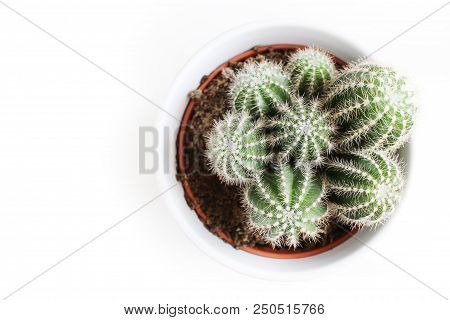 Cactus Succulent Plant In Pot Over White Table Background, Flat Lay, Top View, Feminine Styled Stock