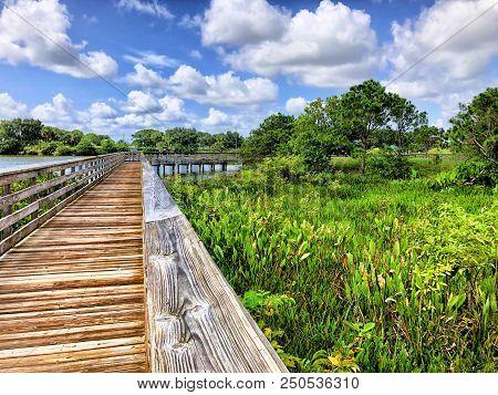 Raised Walking Path In A Swamp