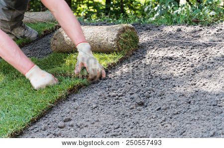 Landscape Gardener Placing Rolls Of Sod Grass On An Unfinished Lawn
