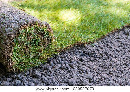 Fresh Roll O Sod Grass On A New Lawn