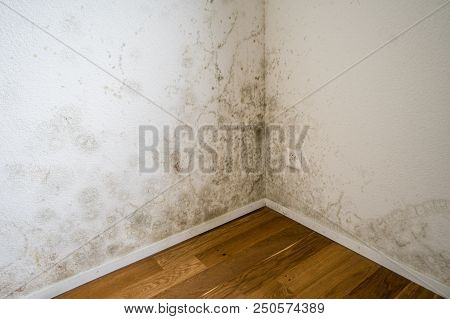 Tocix Mold And Mildew On The Walls Of A New Apartment With Wooden Parquet Floors
