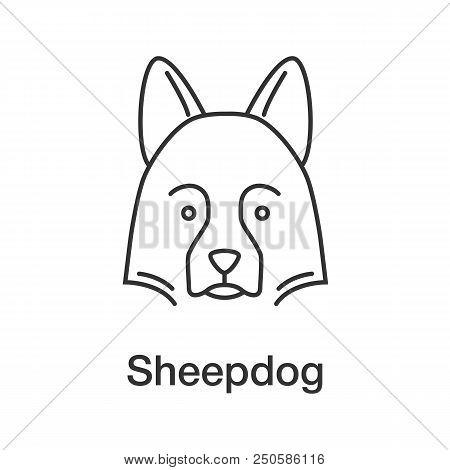 Shetland Sheepdog Linear Icon. Thin Line Illustration. Herding Dog. Contour Symbol. Vector Isolated
