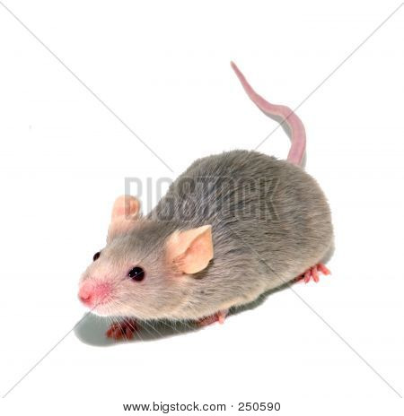 Mouse 4