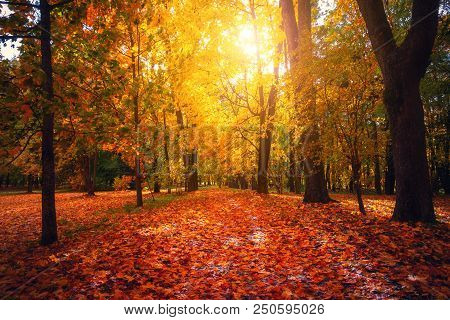 Autumn Landscape. Fall Scene. Tranguil Background. Autumn Park With Coloful Foliage In Sunlight. Yel
