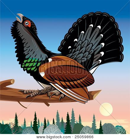 Capercaillie mating-place on a branch poster
