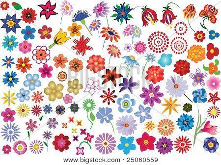 Ensemble d'éléments floraux colorés vector - fleurs