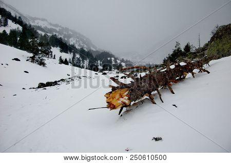 Fallen Tree In The Mountains In Benasque, Pirinieos, Spain