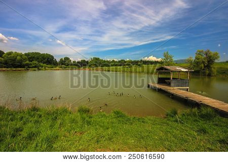 Ducks Swim In A Peaceful Lake On A Sunny Day