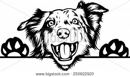 Australian Shepherd Sheltie dog breed face head isolated animal domestic pet canine puppy purebred pedigree hound portrait peeking paws smiling smile happy art artwork illustration design set collection cute pup doggy symbol logo beautiful family friend i poster