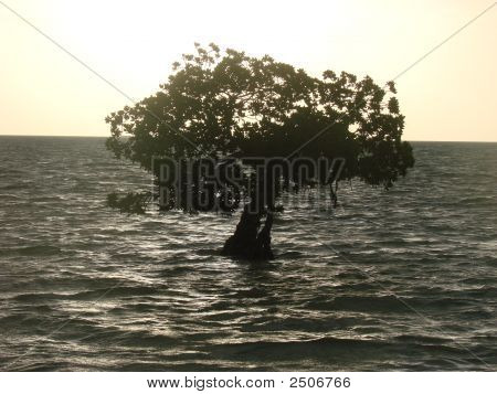 Florida Keys tree in the sea with the