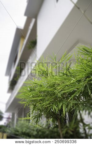 Green Leaves Plant Decorated In The Shop, Stock Photo
