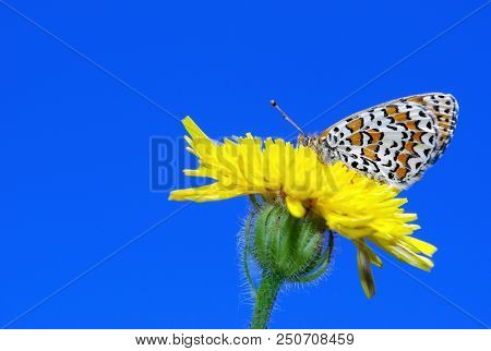 Butterfly Sitting On A Flower. Butterfly On A Dandelion. Bright Red Butterfly On A Meadow. Brush-foo