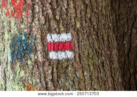 Tourist Sign On The Tree For A Tourist Trip