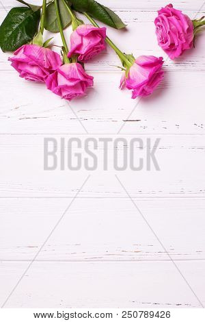 Border From  Pink  Roses  Flowers On White Wooden Background. Floral Still Life. Place For Text. Vie