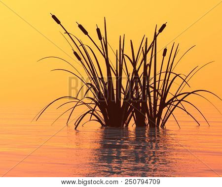 Water plants at sunset -  3D rendering