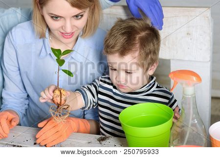 Mother And Son Planting Flower At Home. Gardening, Planting - Mom With Little Gardener Boy Planting