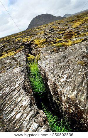 Cracked Volcanic Lava Landscape And Vegitation On Iceland