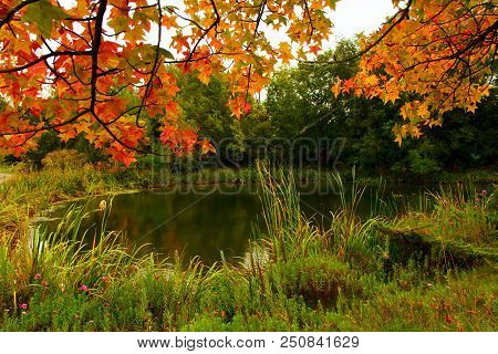 Green Grasses, Leaves Turning Orange And The Feeling Of Fall