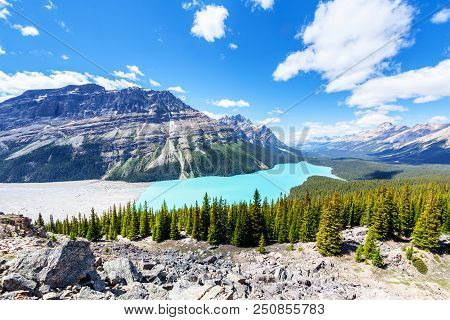 Wide Angle View Of Peyto Lake From Bow Summit In Banff National Park On The Icefields Parkway. The G
