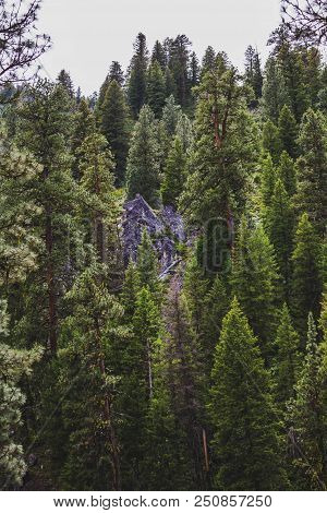 Tall, Green Pine Trees Stand On A Mountain Alongside Gray Rock Formations.