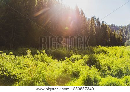 A Small Cabin Structure Sits Tucked Near Forest Trees With Bright Sunlight Above And Green Plants Su