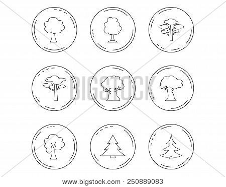 Pine Tree, Maple And Oak Icons. Christmas Trees Linear Signs. Forest Trees Flat Line Icons. Linear C