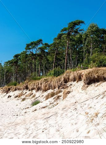 Sandy Beach In Front Of A Dense Forest. Stock Photo.