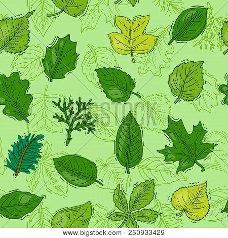 Leaf Vector Green Leaves Of Trees Leafed Oak And Leafy Maple Or Leafing Foliage Illustration Of Leaf
