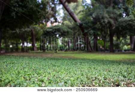 Nature concept. Green meadow in a park, bokeh background, wallpaper.