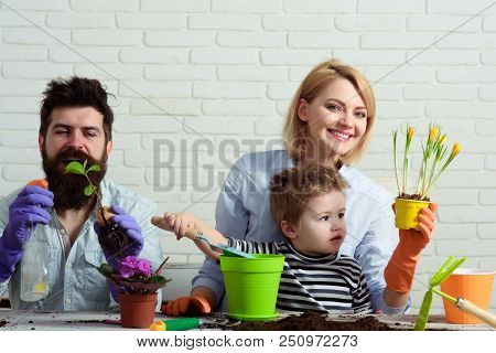 Little Son With Mother, Father Gardening At Home. Child With Parents Together Makes Home Garden. Cut