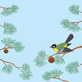 Background, bird titmouse sitting on pine branch against blue sky. Vector poster