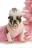 christmas princess - english bulldog wearing princess costume sitting beside pink christmas tree on white background poster