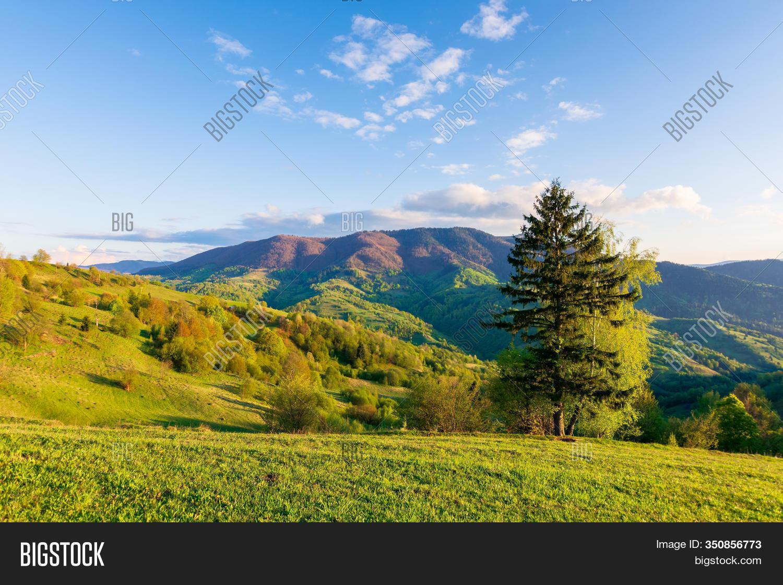 The Wonderful Meadow