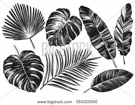 Tropical Leaves, Jungle Botanical Floral Elements. Palm Leaves, Hand Drawn Vector Illustration Reali