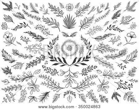 Hand Drawn Floral Decor Leaves. Sketch Ornamental Branches, Decorative Leafs And Flowers Vector Illu