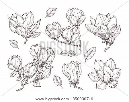 Magnolia Flowers Sketch. Drawing Botanical Spring Bunch Flower. Isolated Blossom Plant And Leaves. H