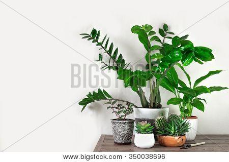 Urban Jungle Concept