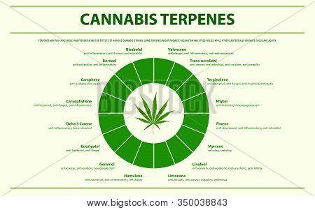 Cannabis Terpenes Horizontal Infographic