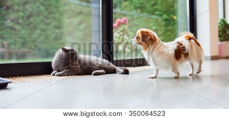 Cat And Dog In The Home Together